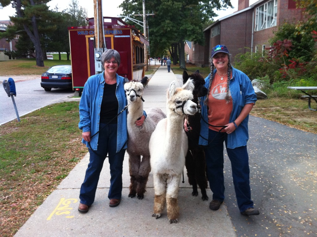 Ellen and Kris and some friendly alpacas at the UNH Homecoming Parade.