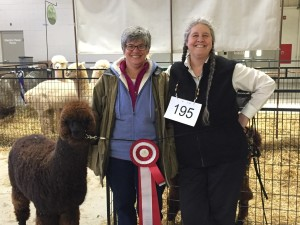 Ellen and Kris with 9 month old Cody at the 2015 North American Alpaca Show